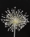 Allium baissunense